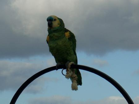 Der Papagei vom Don Camillo