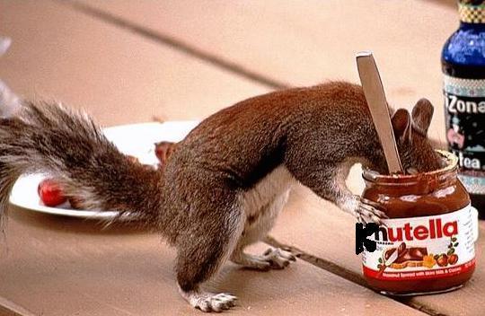 Langsam nährt sich das Eichhörnchen mit Nutelle!!!!!